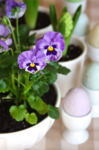 Spring & Easter Pansy Centerpiece