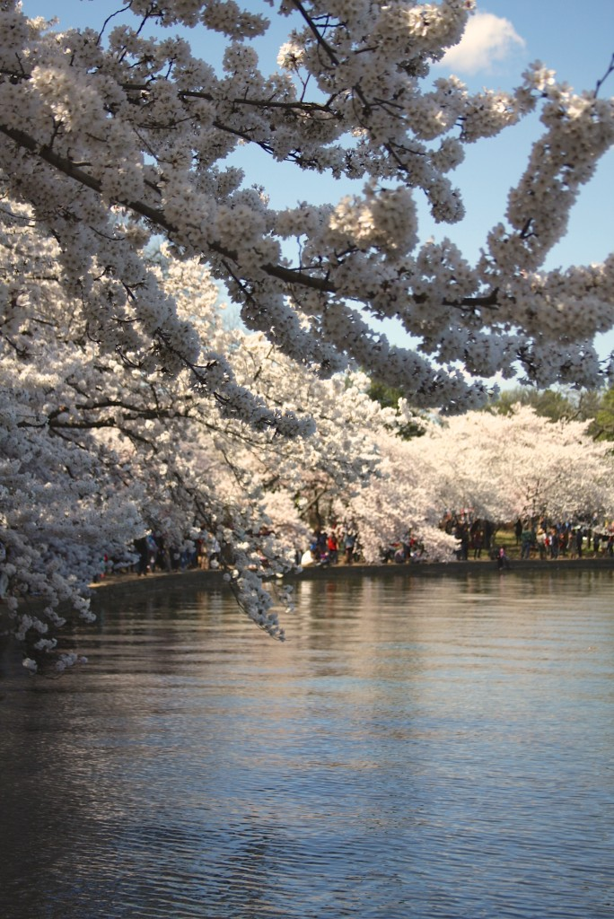 2015 National Cherry Blossom Festival