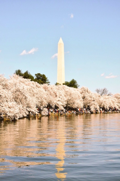 2015 Cherry Blossom Festival Washington DC